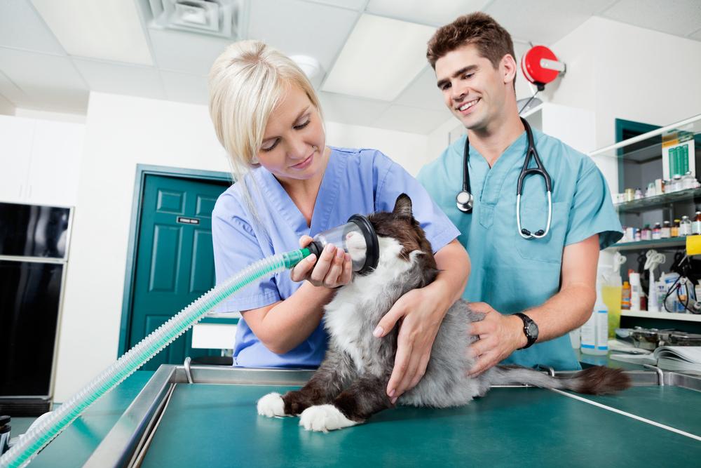 perfil medico veterinario-1